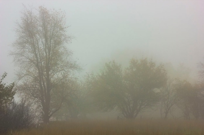 foggy-fall