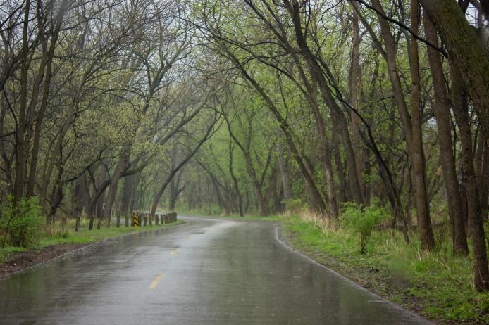 Rain Day (1 of 1)