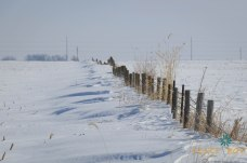 Drifted Fence